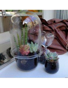 serax Mini terrarium en verre transparent jardin interieur green addict