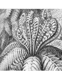 IXXI Décoration murale Pixel Ferns Fougères Ernst Haeckel